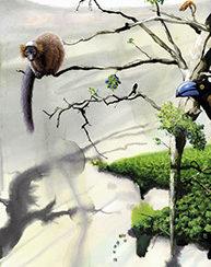 inspiring lemur conservation