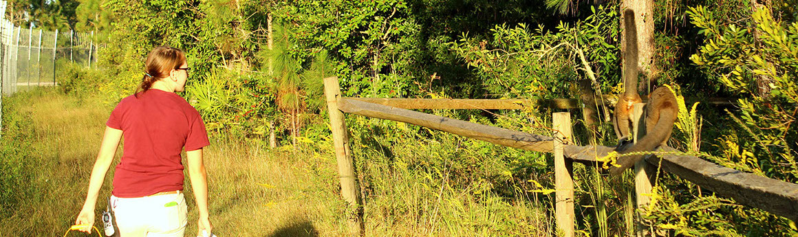 Female intern in a red shirt walking by a fence at the Lemur Reserve