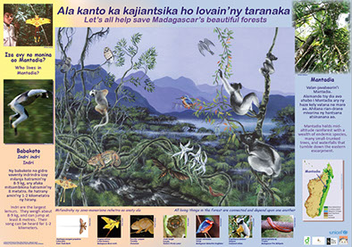 AKO book series poster Malagasy conservation LCF lemur conservation foundation indri no-song