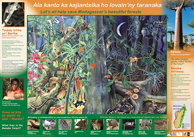 AKO book series poster Malagasy conservation LCF lemur conservation foundation mouse lemur bitika