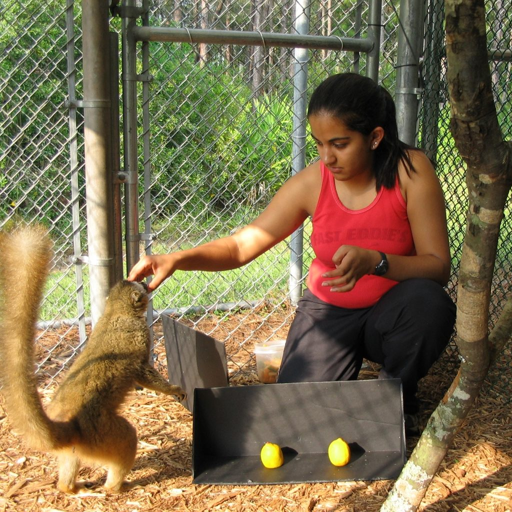 A graduate student and lemur