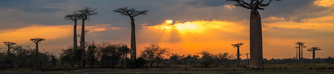 Sunset over baobab trees in Madagascar