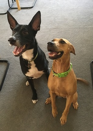 Nacho and Delilah Reserve Dogs