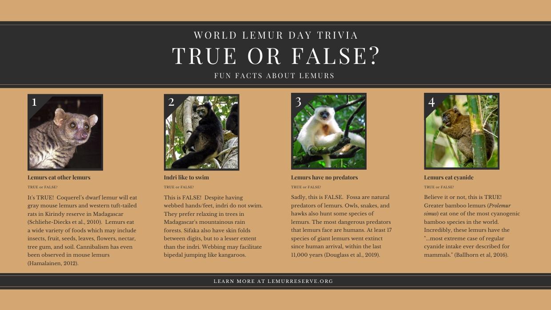 2019 World Lemur Day Trivia
