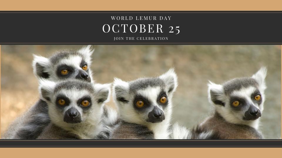 Celebrate World Lemur Day on October 25
