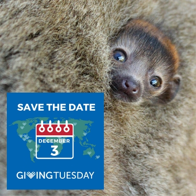 GivingTuesday Save the Date