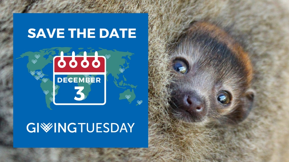 Give the gift of time for endangered lemurs on GivingTuesday