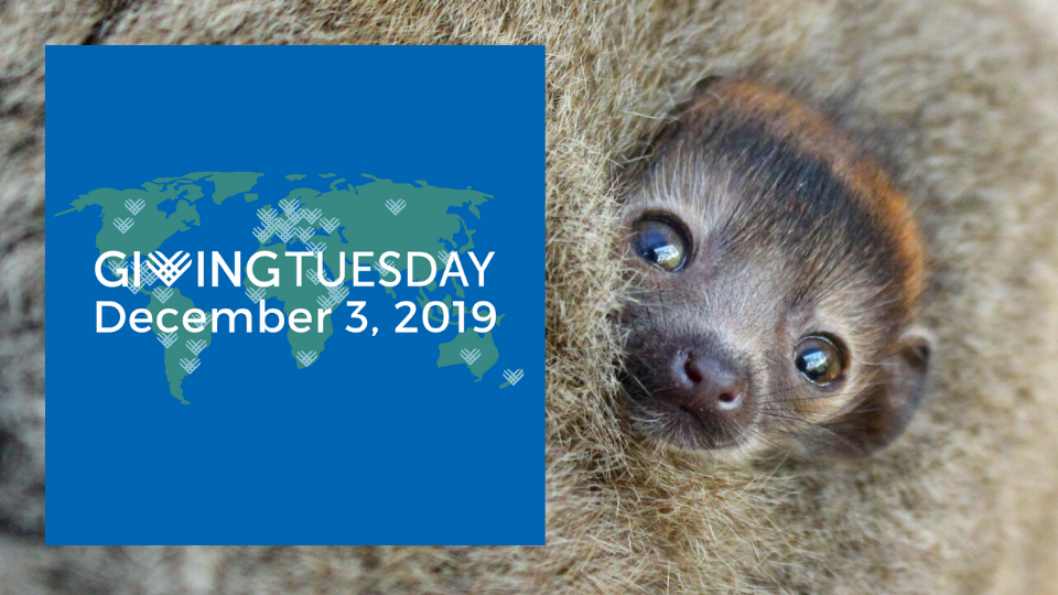 Be a part of GivingTuesday by protecting lemurs