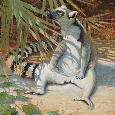"LCF ring-tailed lemur ""Yuengling"" by Jean Blackburn"