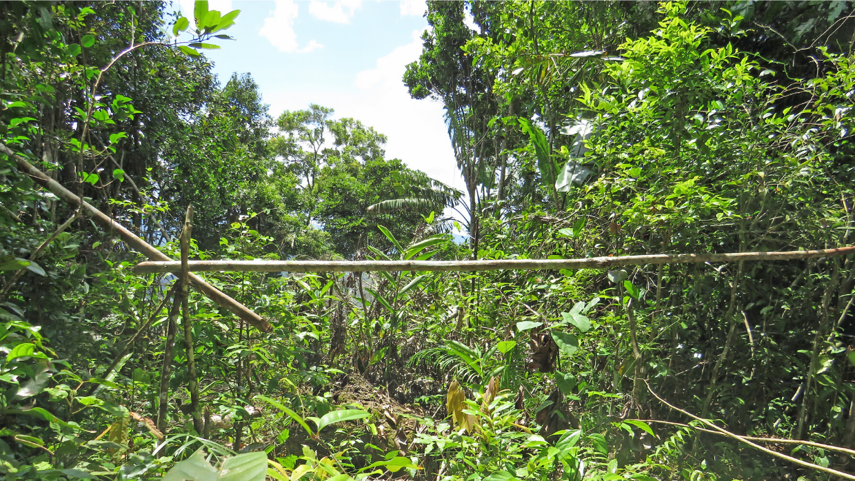 A lemur snare trap removed by LCF's forest monitoring team