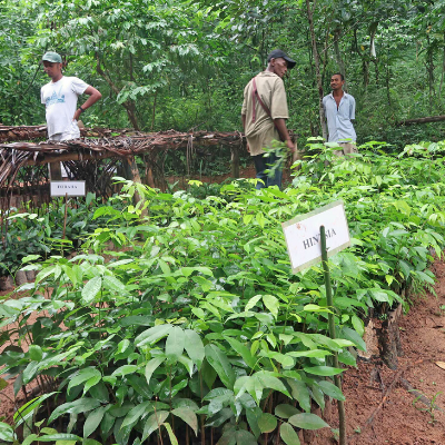 Madagascar tree nursery supported by LCF