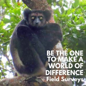 Be the One to Make a World of Difference by supporting LCF Field Surveys
