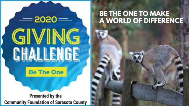Support LCF during the 2020 Giving Challenge