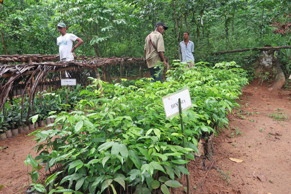 A tree nursery sponsored by LCF and partners in Madagascar.