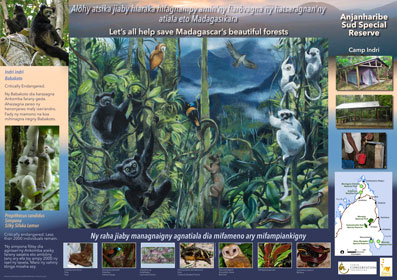 AKO book series poster of Anjanaharibe Sud Special Reserve featuring indri and silky sifaka, Malagasy conservation LCF lemur conservation foundation