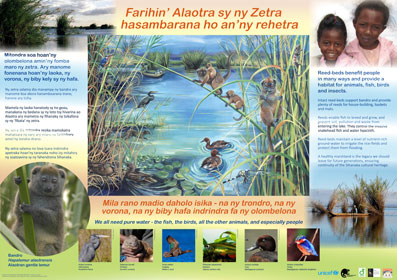 AKO book series poster of Lac Alaotra featuring bandro, Malagasy conservation LCF lemur conservation foundation