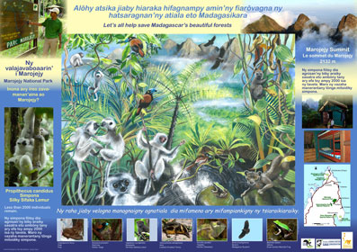 AKO book series poster of Marojejy silky sifaka, Malagasy conservation LCF lemur conservation foundation