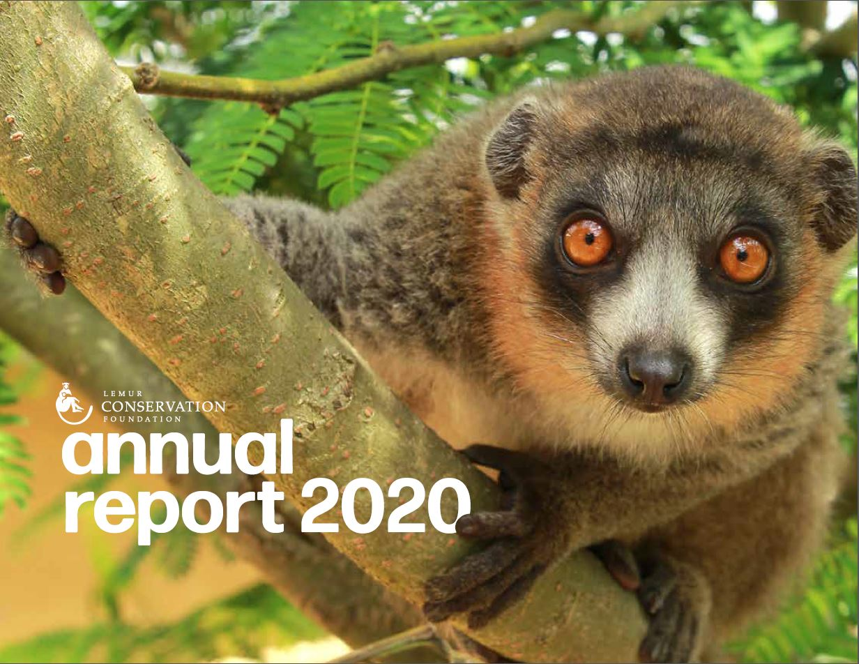 2020 Annual Report Cover featuring a mongoose lemur