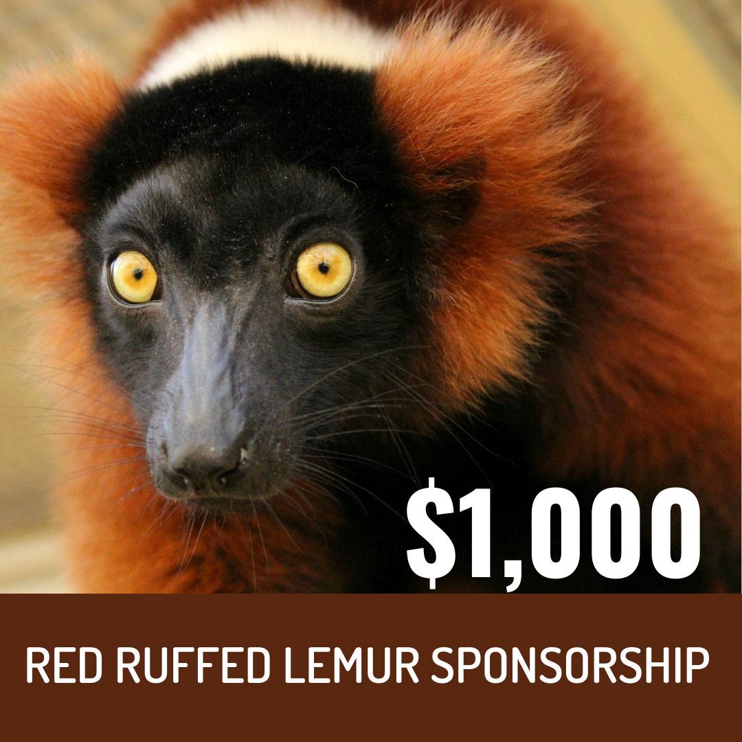 World Lemur Festival 2021 - $1000 Red Ruffed Lemur Sponsorship Level