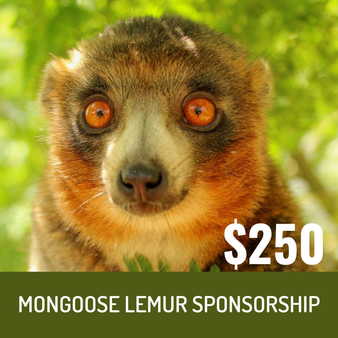 World Lemur Festival 2021 - $250 Mongoose Lemur Sponsorship Level