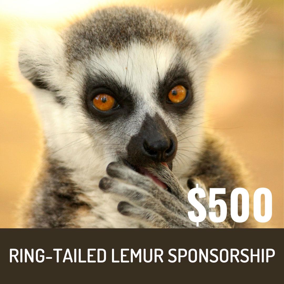 World Lemur Festival 2021 - $500 Ring-Tailed Lemur Sponsorship Level