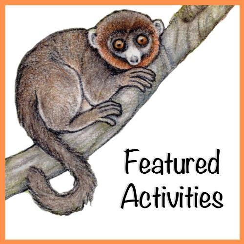 LCF World Lemur Festival 2021 Featured Activities