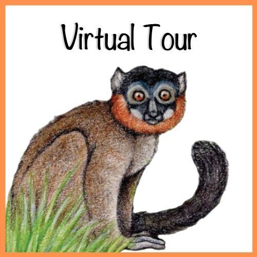 LCF World Lemur Festival 2021 Virtual Tour